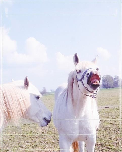 Wechseldeckel für Umhängetasche - Pferde - Fotodruck - Größe L