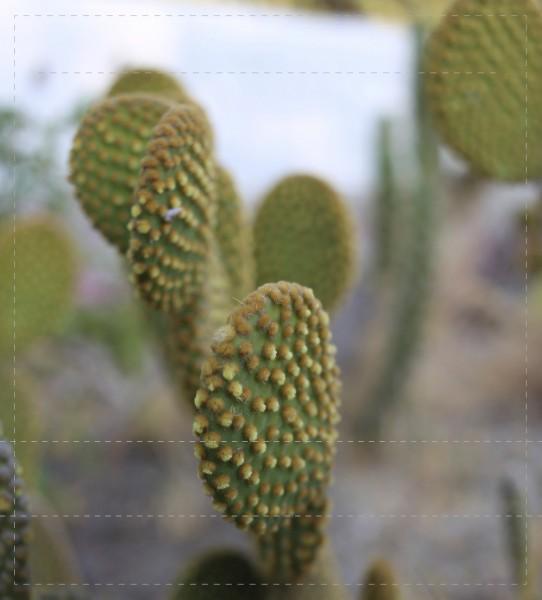 Wechselhülle für Tasche - Kaktus - Foto - Größe M