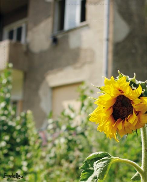 Flap L - Sonnenblume Matt